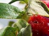 Macro de una fresa