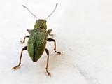 Macro de insecto