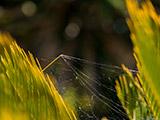 Una tela de araña entre las hojas de una palmera.